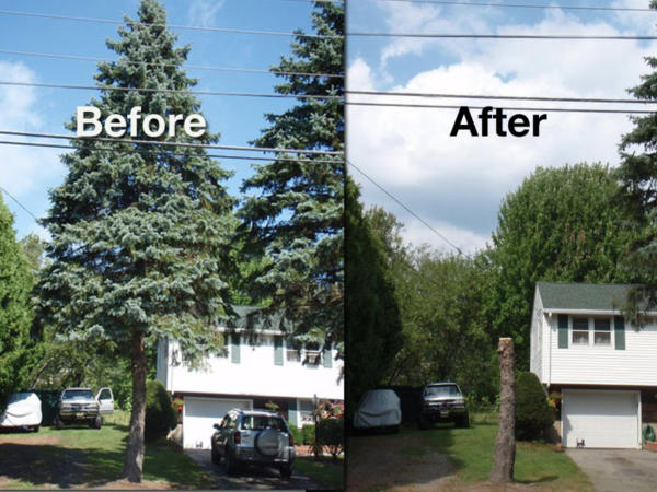 tree+removal+before+and+after